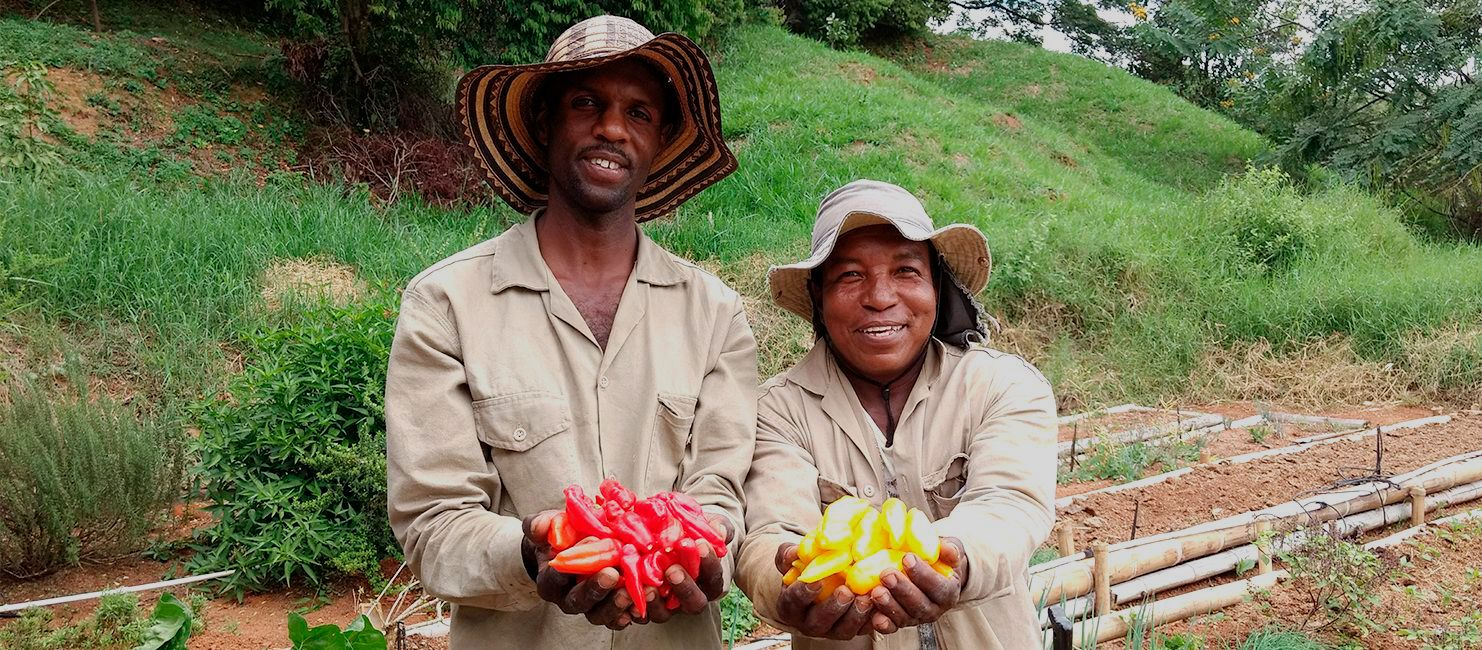 Our Peppers - Peruvian Pepper Oriented - Image full